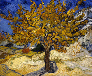 Van Gogh's Mulberry Tree